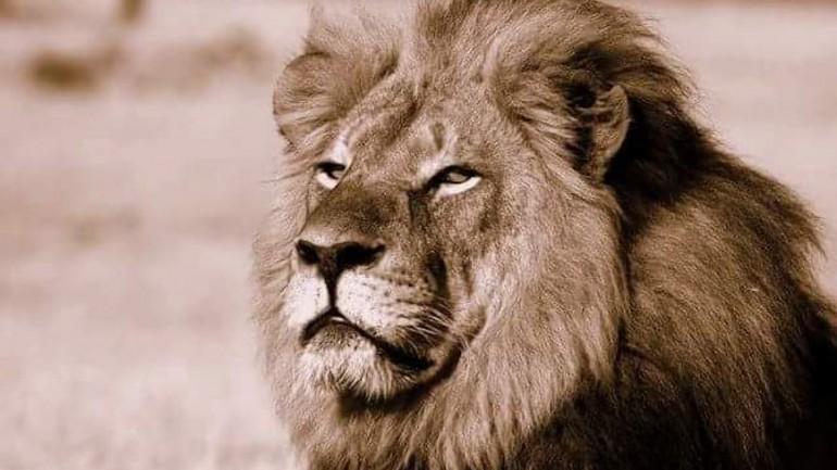 Cecil, o Leão
